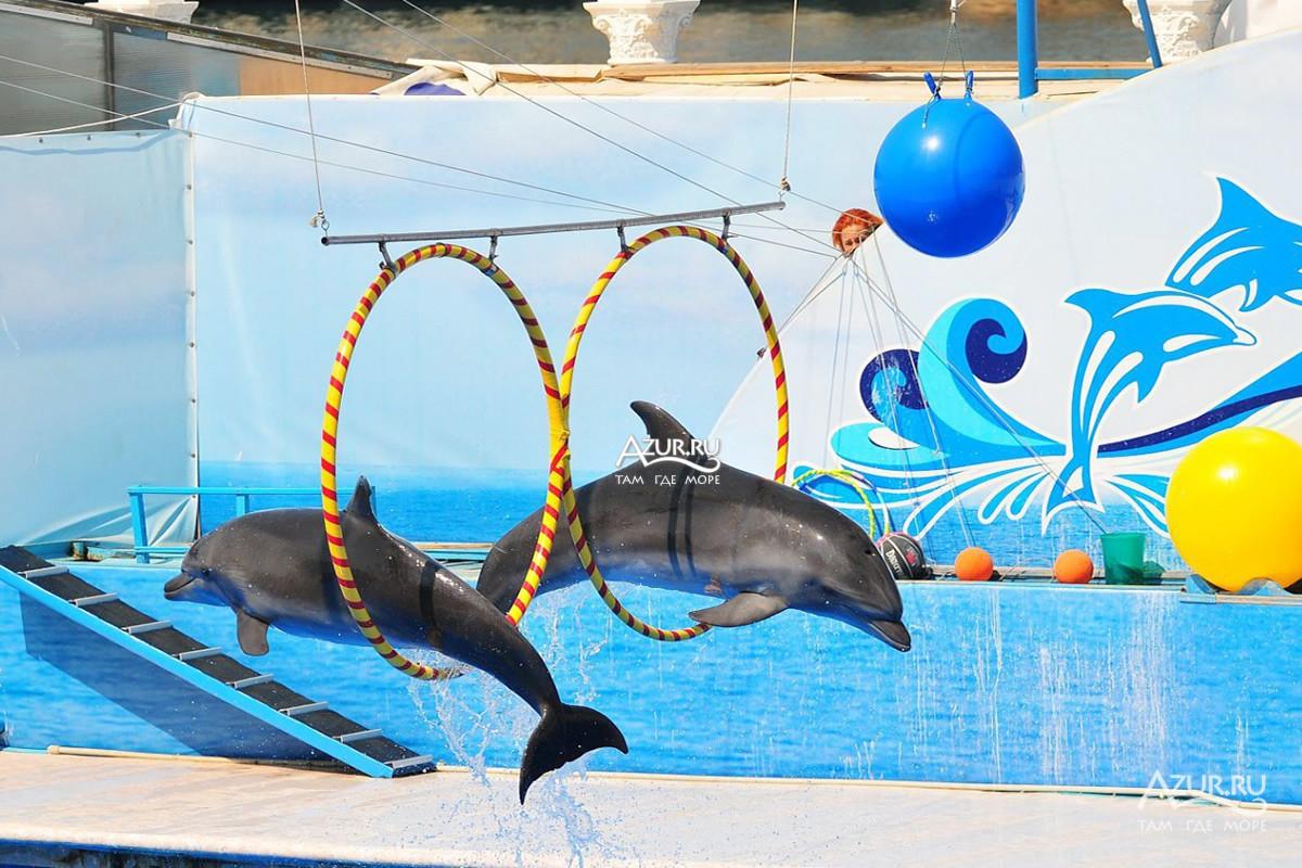 Картинки севастополя дельфинарий