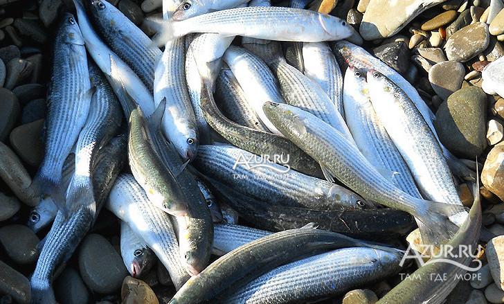 рыбалка в якорной щели