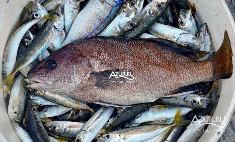 ловля рыбы на озере абрау